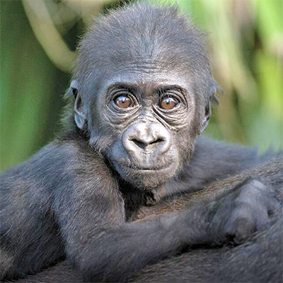 Gorilla Exhibit Water Sump Ultrasonic Liquid Level Transmitter